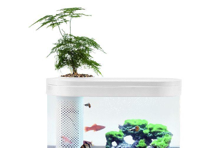 画法几何鱼缸怎么样?画法几何鱼缸谁能推荐一款入门的?-1