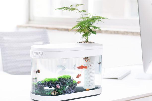画法几何鱼缸评测?画法几何鱼缸性价比如何?-1